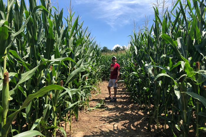 Grandads-Apples-Corn-Maze-700×467