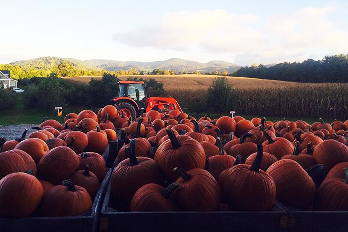 GrandadsApples-pumpkins-mountains2-700×467